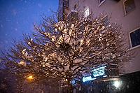 Bialystok, 16.01.2021. Gwaltowny atak zimy, w ciagu paru godzin przybylo kilkanascie centymetrow sniegu N/z osniezone drzewo fot Michal Kosc / AGENCJA WSCHOD