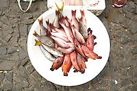 09 JAN 2006, SAO FELIPE/FOGO/CAPE VERDE:<br /> Verkauf von frischem Fisch auf der Strasse, Sao Felipe, Insel Fogo, Kapverdischen Inseln<br /> Selling of fresh fish in the streets of Sao Felipe,  island Fogo, Cape verde islands<br /> IMAGE: 20060109-01-004<br /> KEYWORDS: Travel, Reise, Natur, nature, Meer, sea, seaside, Küste, Kueste, coast, cabo verde, Dritte Welt, Third World, Kapverden, Markt, market, Einzehandel, Verkauf, Ernährung, Ernaehrung, Speisefisch