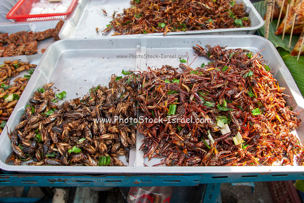 Insects on sale at a stall at the animal market in Bangkok, Thailand