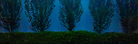 hedge and trees against a blue wall panorama