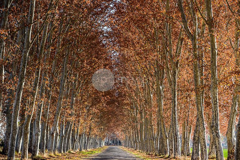 Calle de la Reina. Jardines del Parterre del Palacio Real de Aranjuez. Madrid. España. Europa ©Country Sessions / PILAR REVILLA