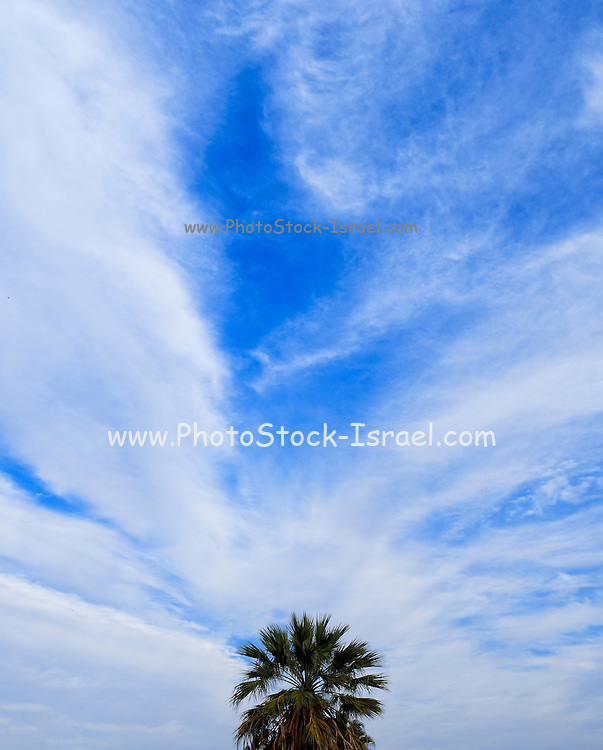 Fan palm tree silhouetted on a blue cloudy sky