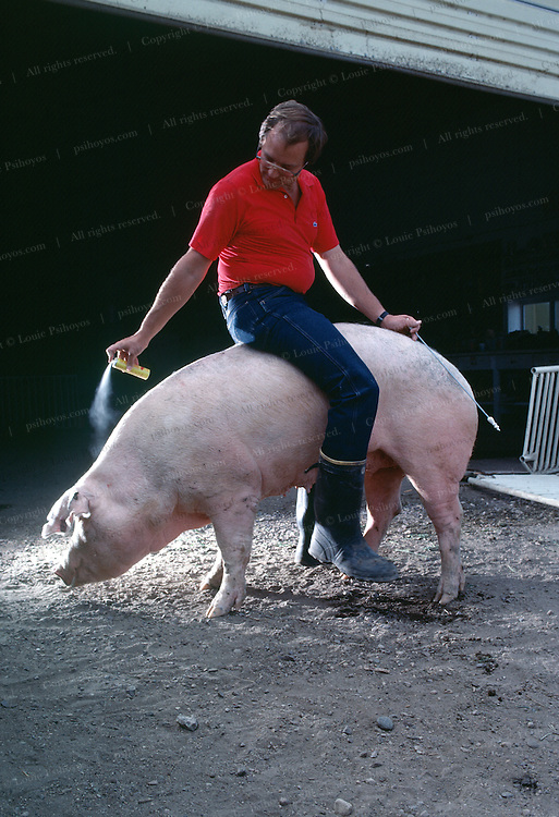 Greg Bartz, a Minnesota farmer sprays a synthesized boar pheromone at a sow he will artifically inseminate with the spirette in his left hand.<br /> <br /> Greg Bartz, a Minnesota farmer sprays a synthesized boar pheromone at a sow he will artifically inseminate with the spirette in his left hand.
