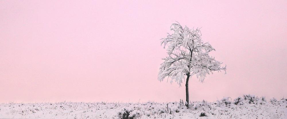 Blushing Winter Beauty_2017_Heidi Watson