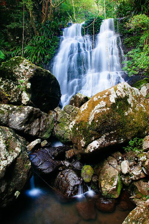 Selva Falls in the pristine subtropical rainforest of Border Ranges National Park.
