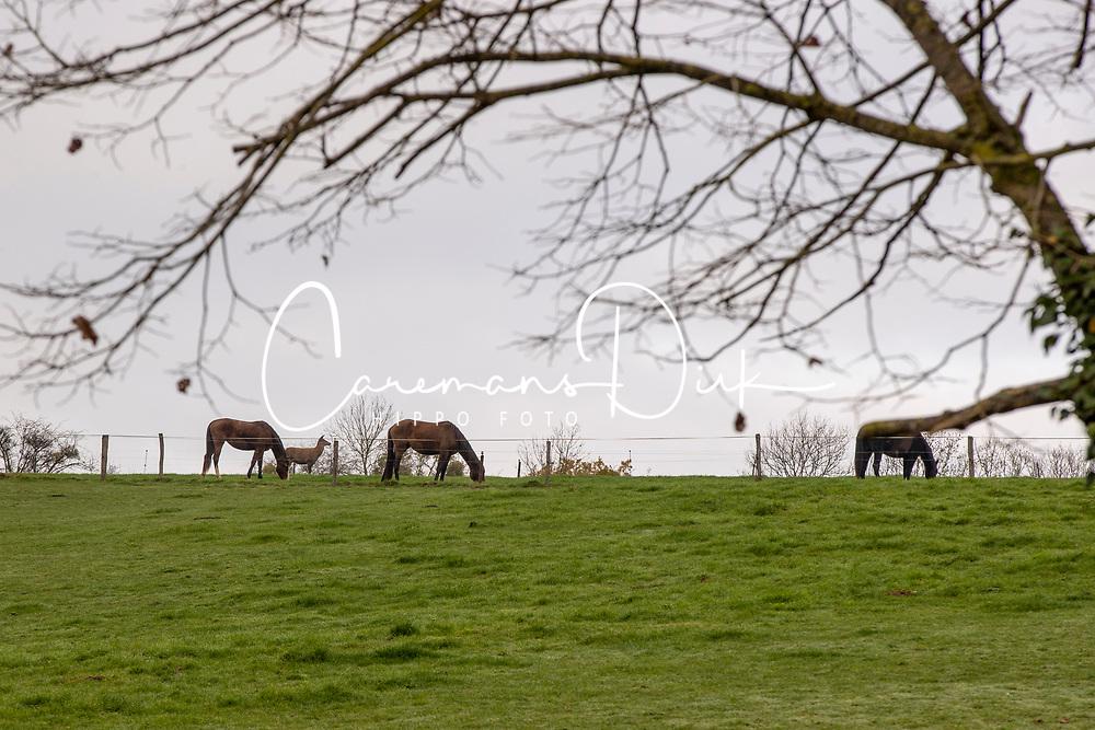 Elevage de Septon <br /> Durbuy 2020<br /> © Hippo Foto - Dirk Caremans<br /> 14/11/2020