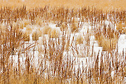 Prairie dock in ditch in winter<br /> Cadillac<br /> Saskatchewan<br /> Canada