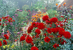 A foggy autumn morning in the exotic garden at Great Dixter. Verbena bonariensis and Dahlia 'Wittemans Superba' in the foreground