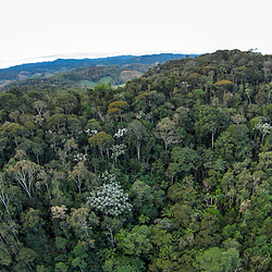 """Aérea Floresta (Paisagem) fotografado em Santa Maria de Jetibá, Espírito Santo -  Sudeste do Brasil. Bioma Mata Atlântica. Registro feito em 2016.<br /> <br /> <br /> <br /> ENGLISH: Forest aerial photographed  in Santa Maria de Jetibá, Espírito Santo - Southeast of Brazil. Atlantic Forest Biome. Picture made in 2016."""