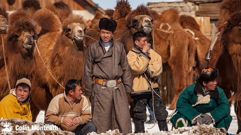 Bactrian camel polo,  spectators, ' festival of a thousand camels' Bulgan, winter in Gobi desert, Mongolia