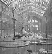 9969-C39  Chicago, January 1952