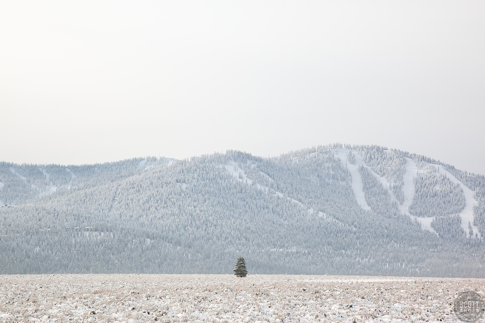 """""""Snowy Martis Valley 3"""" - Photograph of a lone tree in a snow covered Martis Valley in Truckee, California. Northstar Ski Resort can be seen in the background."""