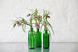 Fritillaries in green glass poison bottle