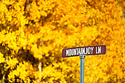 """SHOT 9/23/14 3:31:59 PM - A street sign for Mountainjoy Lane against the brilliant backdrop of aspen leaves changing color near Rollinsville, Co. in the Arapaho National Forest. Aspens are trees of the willow family and comprise a section of the poplar genus, Populus sect. Populus. The Quaking Aspen of North America is known for its leaves turning spectacular tints of red and yellow in the autumn of the year (and usually in the early autumn at the altitudes where it lives). This causes forests of aspen trees to be noted tourist attractions for viewing them in the fall. These aspens are found as far south as the San Bernardino Mountains of Southern California, though they are most famous for growing in Colorado. Autumn leaf color is a phenomenon that affects the normally green leaves of many deciduous trees and shrubs by which they take on, during a few weeks in the autumn months, one or many colors that range from red to yellow. The phenomenon is commonly called fall colors and autumn colors, while the expression fall foliage usually connotes the viewing of a tree or forest whose leaves have undergone the change. In some areas in the United States """"leaf peeping"""" tourism between the beginning of color changes and the onset of leaf fall, or scheduled in hope of coinciding with that period, is a major contribution to economic activity. (Photo by Marc Piscotty / © 2014)"""