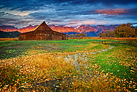 Grand Teton National Park during fall foliage in Moose, Wyoming, at barns along Mormon Row and Antelope Flats RD for sunrise with clouds.