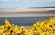 Coastal landscape of tidal sands, Budle Bay, Northumberland coast, England, UK