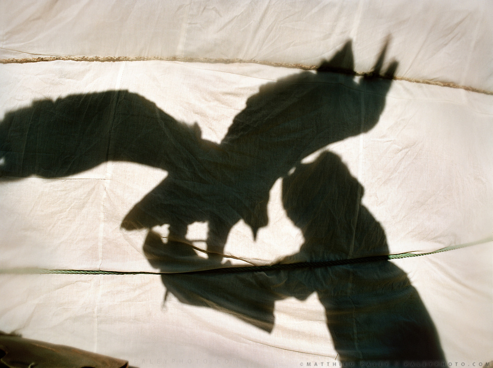 Eagle shadow on a yurt wall.<br /> <br /> Eagle Hunting festival in Western Mongolia, in the province of Bayan Olgii. Mongolian and Kazak eagle hunters come to compete for 2 days at this yearly gathering. Mongolia