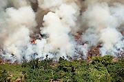 Man made fire clears rainforest land south of Mbandaka, DRC, May 18, 2009. ©Daniel Beltra