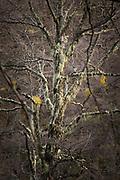 Close-up of tree in Camino el Frey in Bariloche, Argentina