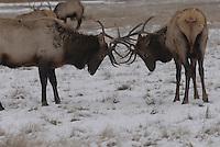 Sleigh rides on the National Elk Refuge