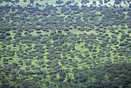 Dehesa Woodland