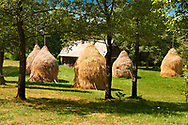 Traditional hay ricks in a wooded field near Breb, Nr Sighlet, Maramures, Transylvania .<br /> <br /> Visit our ROMANIA HISTORIC PLACXES PHOTO COLLECTIONS for more photos to download or buy as wall art prints https://funkystock.photoshelter.com/gallery-collection/Pictures-Images-of-Romania-Photos-of-Romanian-Historic-Landmark-Sites/C00001TITiQwAdS8