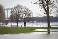 flood of the Rhine on February 5th. 2021, flooded meadow in the district Poll, Rodenkirchener bridge, Cologne, Germany.<br /> <br /> Hochwasser des Rhein am 5. Februar 2021, ueberflutete Rheinwiesen im Stadtteil Poll, Rodenkirchener Bruecke, Koeln, Deutschland.