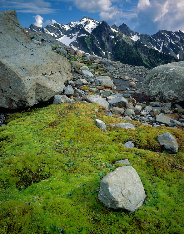 Anderson Pass, moss and glacial boulders, summer, Olympic National Park, Washington, USA
