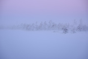 Last moments of blue hour before sunrise and soft winter fog flows over raised bog in winter, Kemeri National Park (Ķemeru Nacionālais parks), Latvia Ⓒ Davis Ulands   davisulands.com