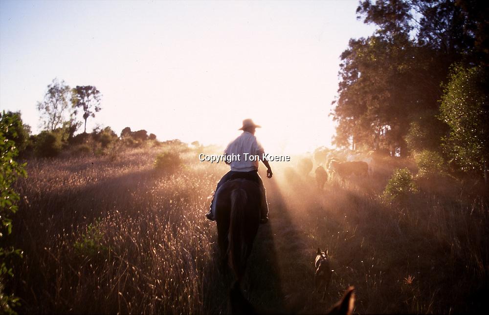 cowboy in Australia