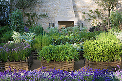 Herbs planted in woven willow raised beds in the Daylesford Organic Summer Solstice Garden. Outdoor fireplace, lavender edging