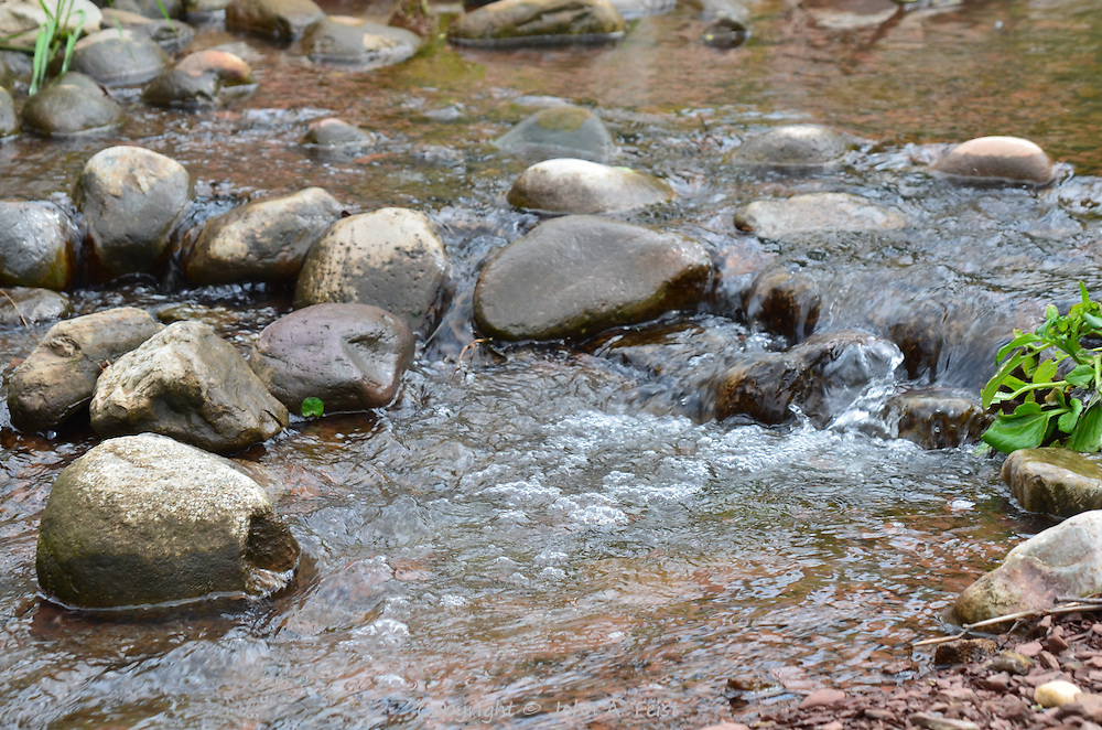 This little stream was happily bubbling along, flush with fresh water.  Hillsborough, NJ