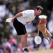 Air Abby, a Queensland Heeler, stretches out to catch the Frisbee as trainer Bill Eicher watches during the Dog Chow Incredible Dog Challenge competition in San Diego, California.