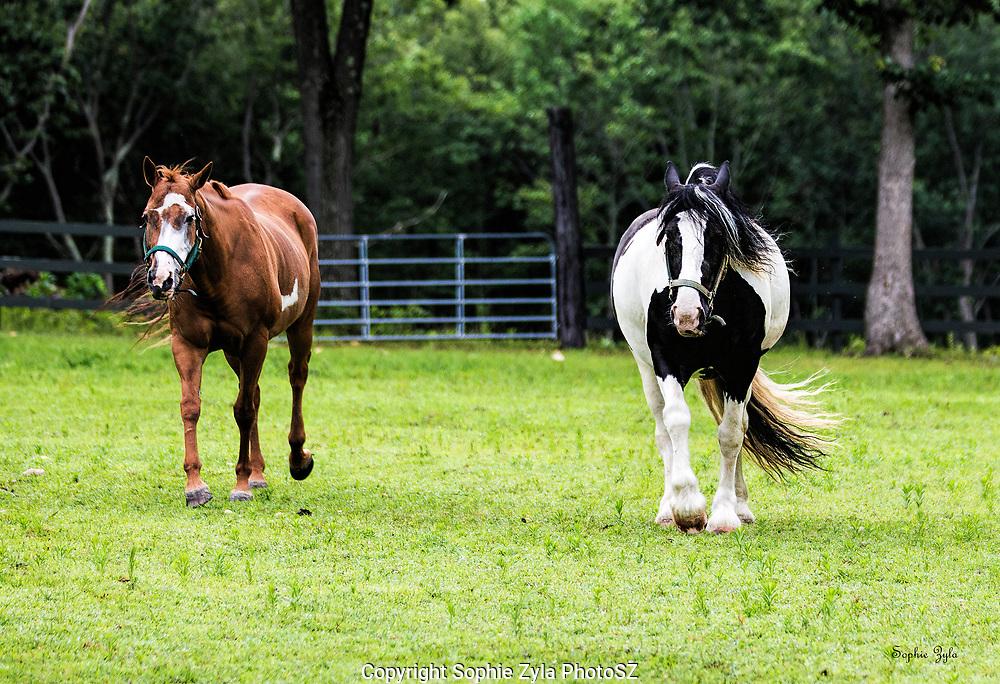 Suzie and Kendall, EVB Kendall Jackson