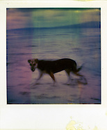 Old Polaroid of a dog wandering along the beach, Palawan Island, Philippines, Southeast Asia