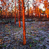 Fine Art Photographs of the Forest by Paul Foley - Lightmoods