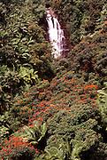 Waterfall, Hamakua Coast, Big Island of Hawaii