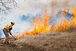 Fire professional managing fire line during controlled burn on Wilt's Prairie, a Blackland Prairie remnant near Ennis, Texas, south of Dallas. Texas, USA.