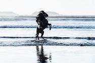 Horse rider at the beach.
