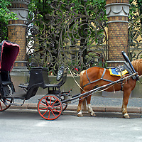Europe, Russia, St. Petersburg. Horsedrawn Carriage awaits on an avenue in St. Petersburg.