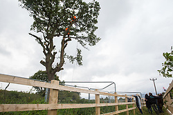 Steeple Claydon, 23rd September, 2020. A small group of local people and anti-HS2 activists based at the nearby Poors Piece Conservation Project watches tree surgeons working with the National Eviction Team on behalf of HS2 Ltd fell a 200-year-old oak tree alongside the East West Rail route known locally as the '7 Sisters Oak' as part of works connected to the HS2 high-speed rail link. The felling of the tree, which was home to bats and other species, was facilitated by a joint force of around fifty bailiffs, security guards and police officers from Thames Valley Police.