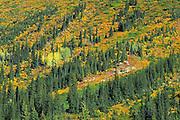 Autumn in the subalpine<br /> Glacier National Park<br /> British Columbia<br /> Canada