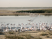 Flamingoes at the Al Wathba Wetland Reserve. Nestled between Baniyas City, Musaffah, and the Abu Dhabi-Al Ain Truck Road, the unique Al Wathba Wetland Reserve covers five square kilometres that is made up of wetlands, sabkhas (sand flats), fossilised sands and dunes.