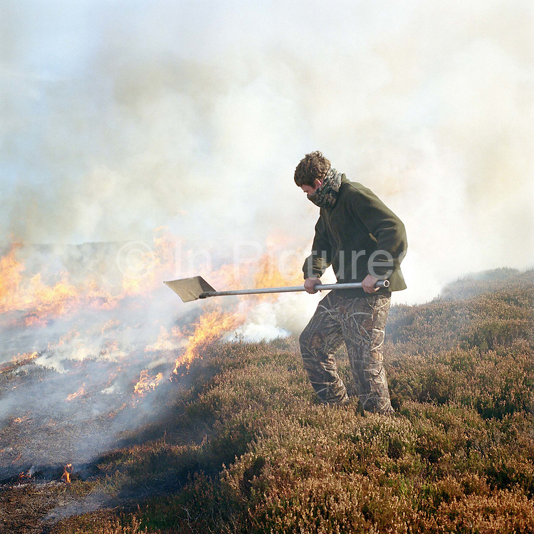 Gamekeeper uses a hand beater to put out the fire whilst heather burning, Bransdale shooting estate, North York Moors, North Yorkshire, UK. Heather is burnt to regenerate it, the more patches there are on a moor the better it is, producing more habitat for the grouse, and that has a knock on effect for the wader population as well.