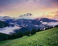 Glacier Peak from meadows of Liberty Cap, Glacier Peak Wilderness Washington USA