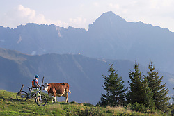 Mountain biker stroking cow in alpine landscape, Zillertal, Tyrol, Austria