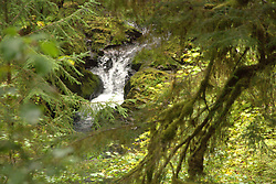 Waterfall along Willaby Creek. Location: Quinault Rain Forest Trail, Olympic National Forest, Washington, US