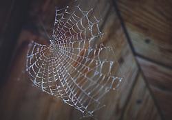 THEMENBILD - ein Spinnennetz besetzt mit Wassertropfen in Nahaufnahme, aufgenommen am 10. August 2018, Kaprun, Österreich // a spider web studded with drops of water in macro on 2018/08/10, Kaprun, Austria. EXPA Pictures © 2018, PhotoCredit: EXPA/ Stefanie Oberhauser