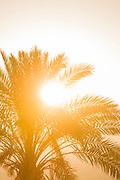 Sun shining through palm tree leaves at sunset, Paphos, Cyprus