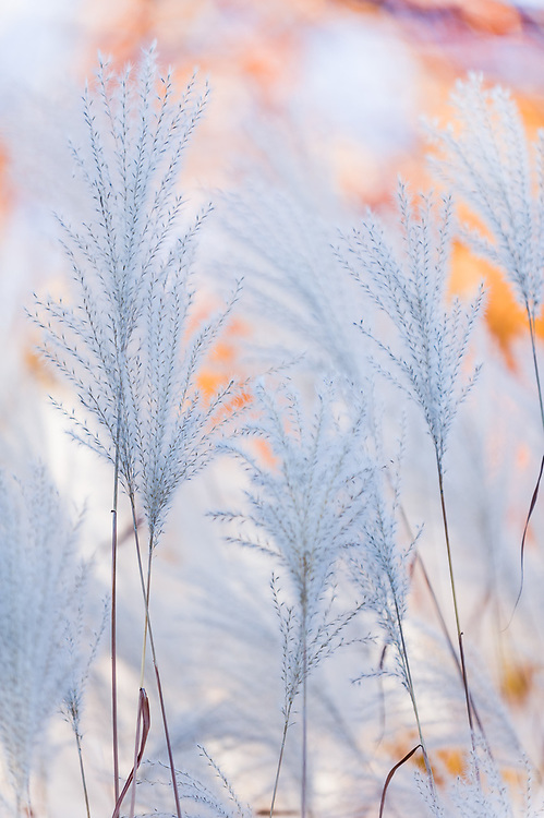 Domestic garden abstract, October, afternoon light, Cheshire County, New Hampshire, USA
